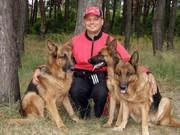 Purina Pro Plan сухие корма для собак