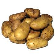 Продажа картофеля в Украине,  продаем овощи оптом