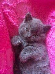 Милые плюшевые котики