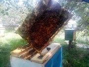 Продам пчелопакеты: Украинская Степная плодная матка + 4 рамки