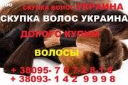 Продать Куплю Волосы Полтава Дорого